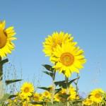 sommar på landet